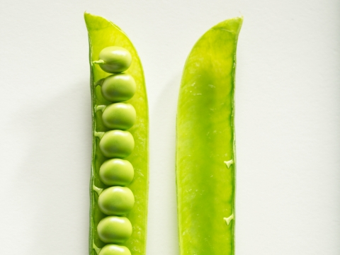 Radipure™ Pea Protein Isolate