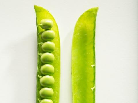 Radipure™ 豌豆分離蛋白